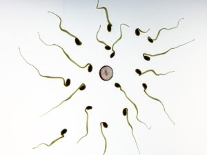 sperm and egg